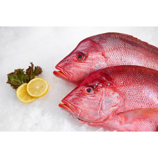 Red Snapper - Wild - Red Sea