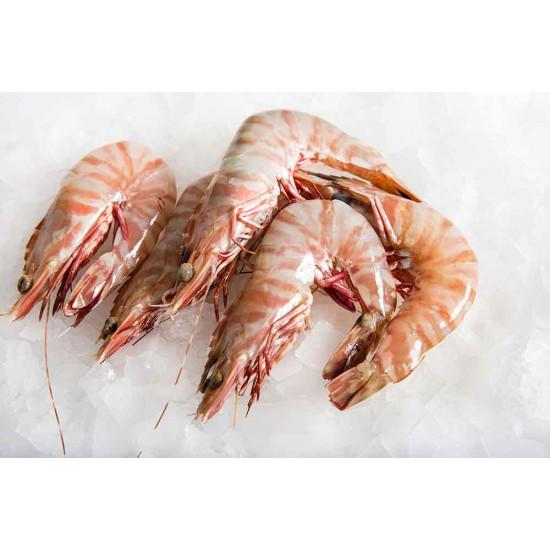 Balady Shrimp - Wild - Red Sea - Medium